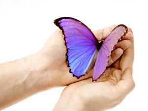 butterfly-totem-300